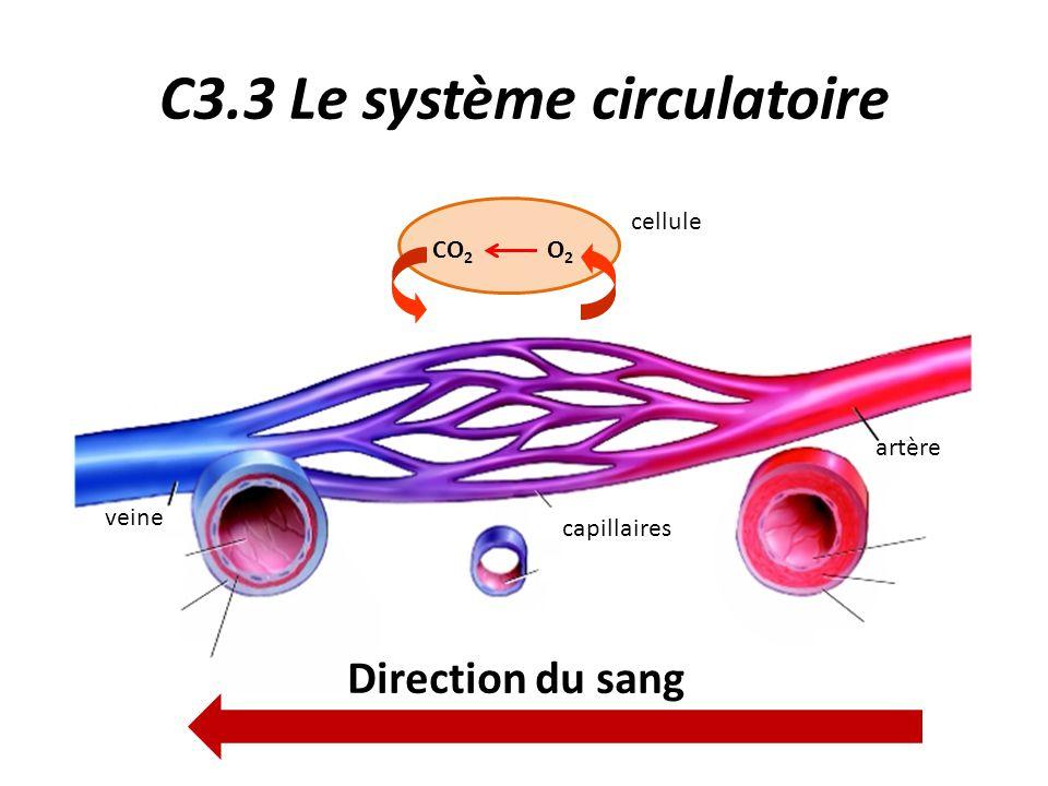 C3.3 Le système circulatoire Trajet du sang : 2.Les échanges gazeux entre le sang et les cellules des organes s'effectuent au niveau des capillaires tissulaires.