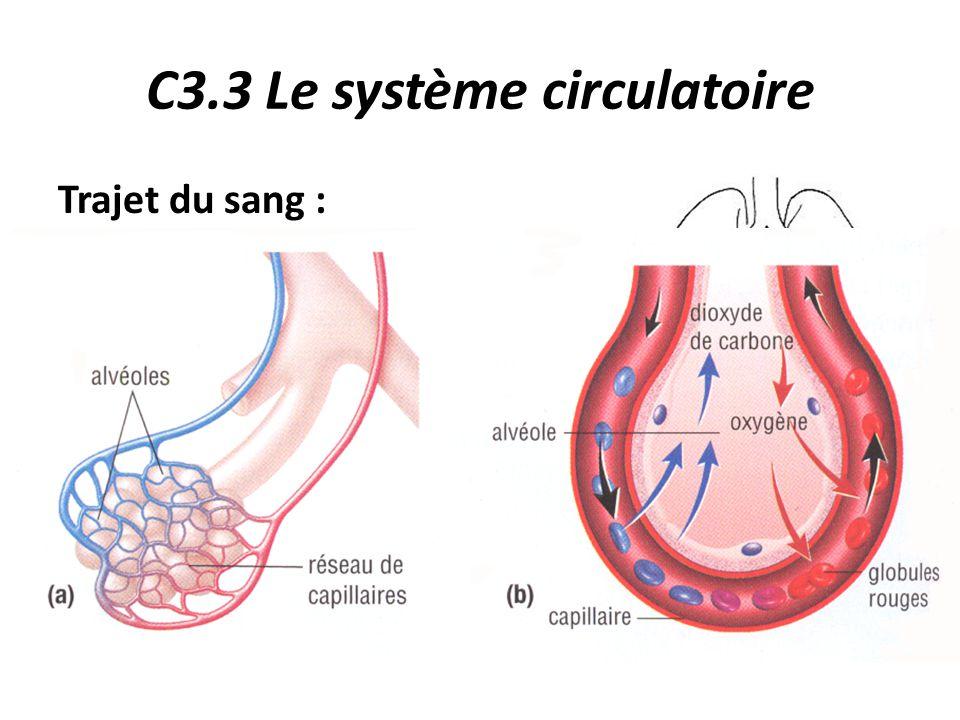 C3.3 Le système circulatoire Trajet du sang : 4.Le sang se débarrasse du CO 2 et est réoxygéné au niveau des capillaires pulmonaires qui entourent les alvéoles.