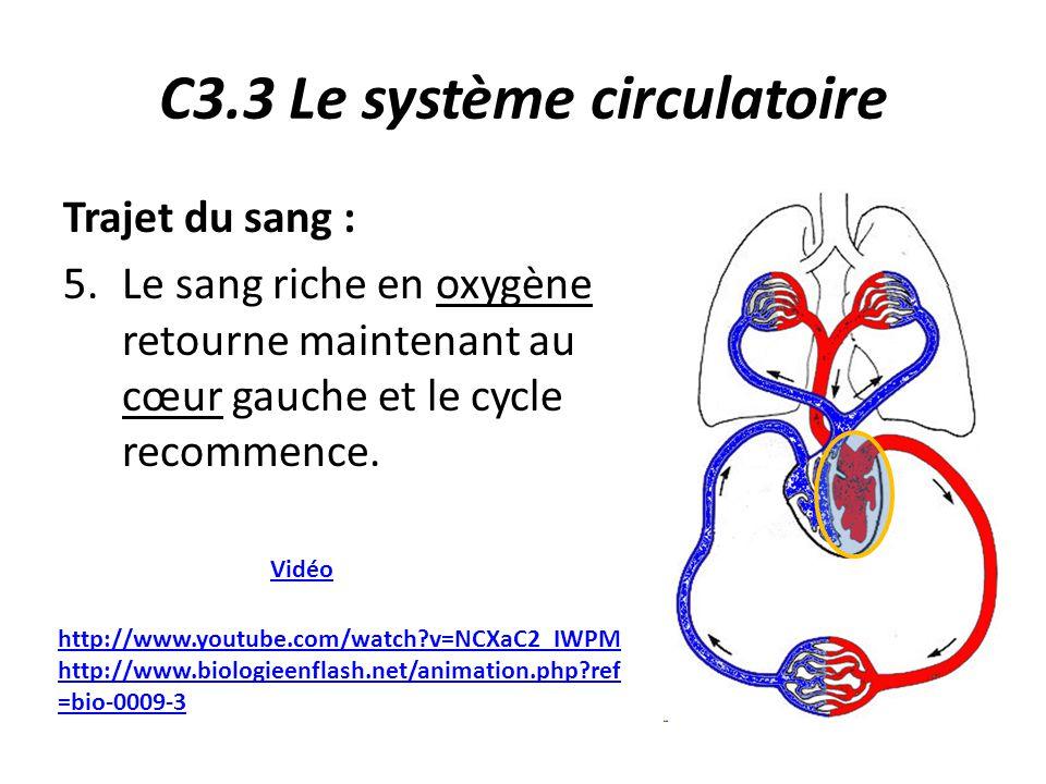C3.3 Le système circulatoire Trajet du sang : 5.Le sang riche en oxygène retourne maintenant au cœur gauche et le cycle recommence.