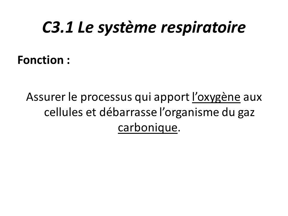C3.1 Le système respiratoire Fonction : Assurer le processus qui apport l'oxygène aux cellules et débarrasse l'organisme du gaz carbonique.