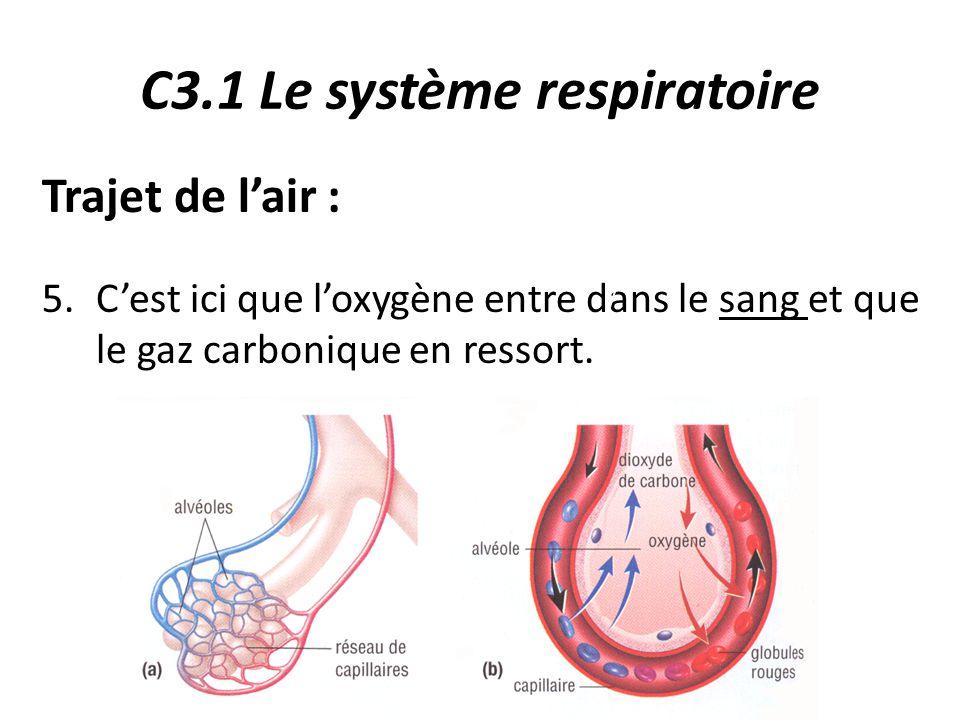 C3.1 Le système respiratoire Trajet de l'air : 5.C'est ici que l'oxygène entre dans le sang et que le gaz carbonique en ressort.