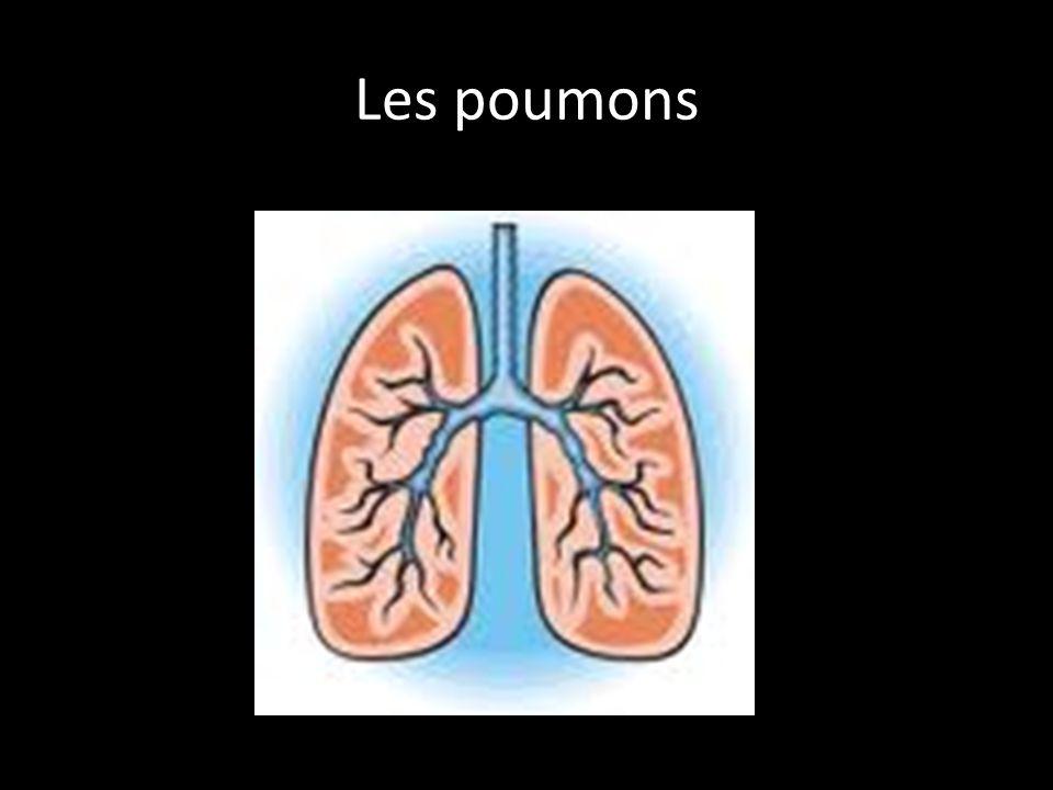 Les poumons