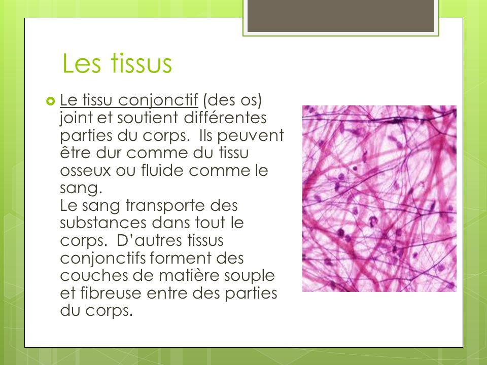 Les tissus  Le tissu conjonctif (des os) joint et soutient différentes parties du corps.