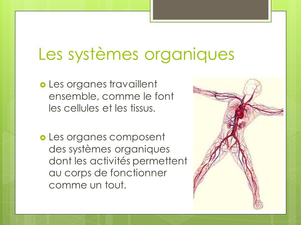 Les systèmes organiques  Les organes travaillent ensemble, comme le font les cellules et les tissus.