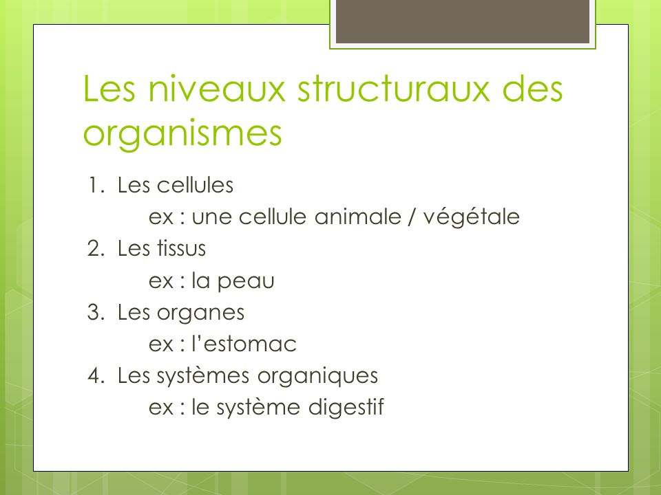 Les niveaux structuraux des organismes 1.Les cellules ex : une cellule animale / végétale 2.