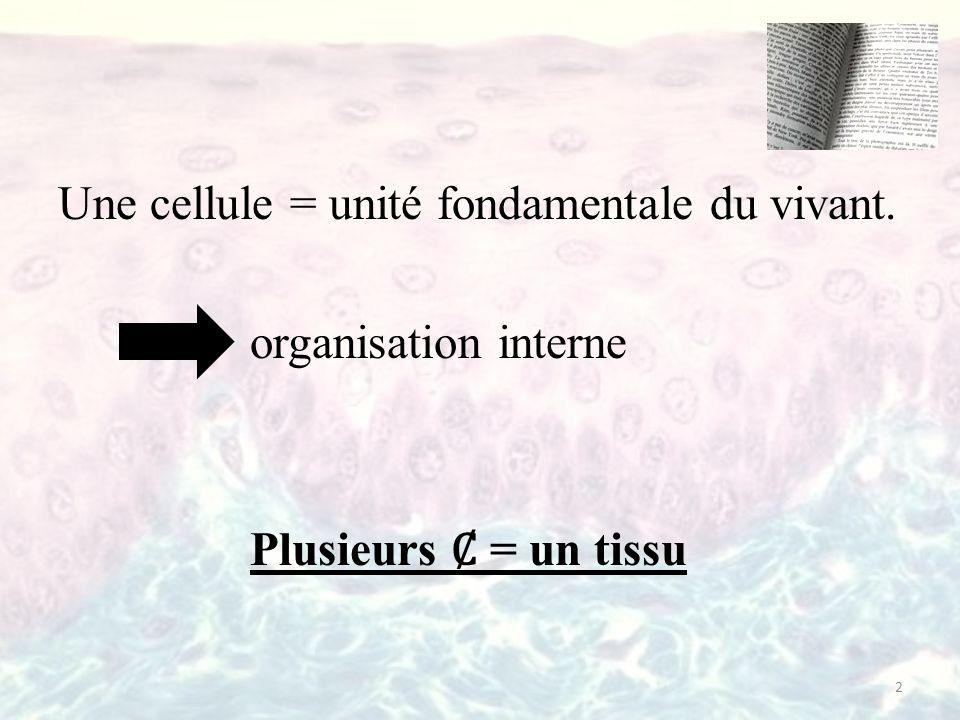 Une cellule = unité fondamentale du vivant. organisation interne Plusieurs = un tissu 2