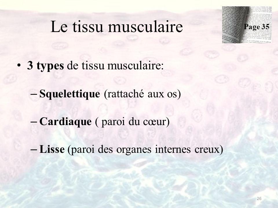 Le tissu musculaire 3 types de tissu musculaire: – Squelettique (rattaché aux os) – Cardiaque ( paroi du cœur) – Lisse (paroi des organes internes creux) 26 Page 35