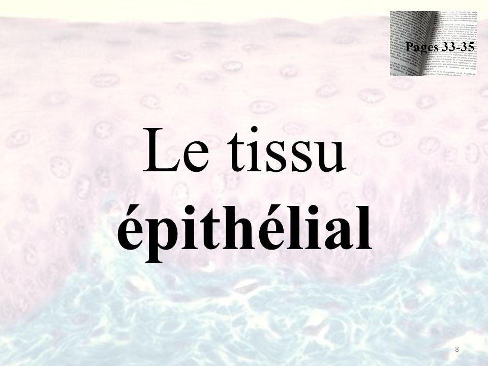 Le tissu épithélial = épithélium 2 types: – L'épithélium de revêtement Peau Paroi interne des cavités, des organes creux et des conduits.
