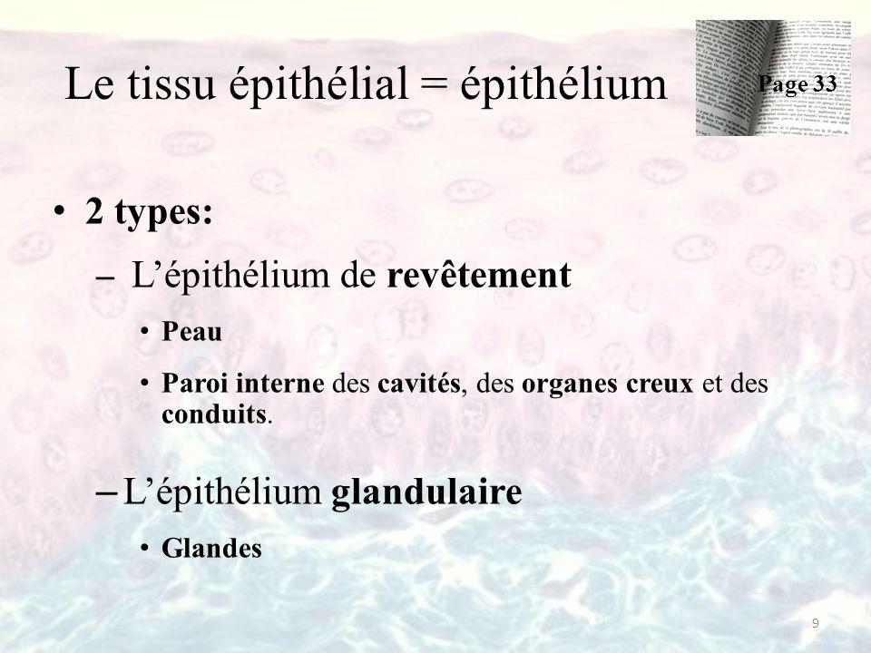 Le tissu épithélial = épithélium 2 types: – L'épithélium de revêtement Peau Paroi interne des cavités, des organes creux et des conduits. – L'épithéli