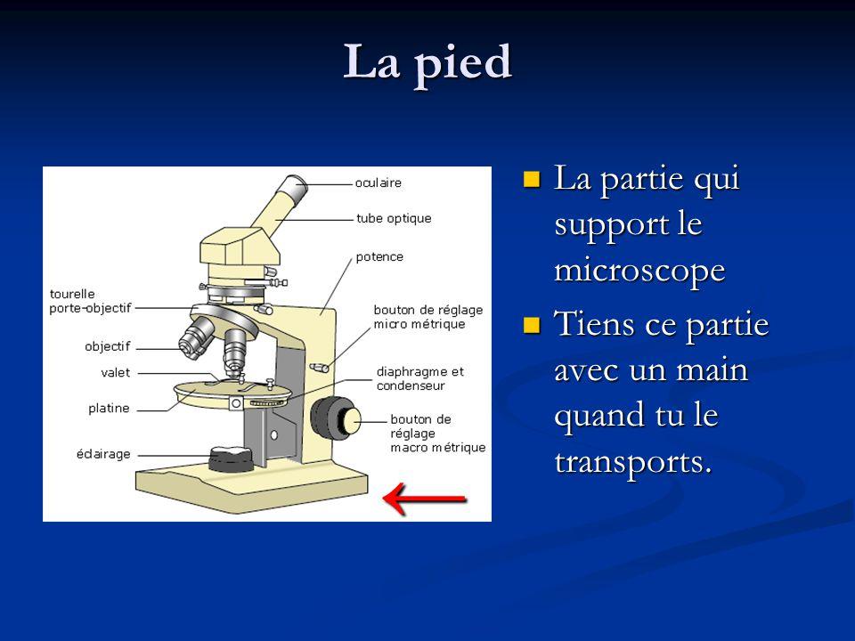 La pied La partie qui support le microscope La partie qui support le microscope Tiens ce partie avec un main quand tu le transports.