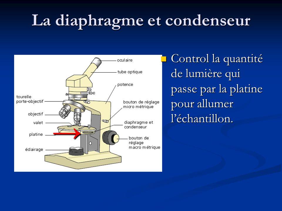 La diaphragme et condenseur Control la quantité de lumière qui passe par la platine pour allumer l'échantillon.
