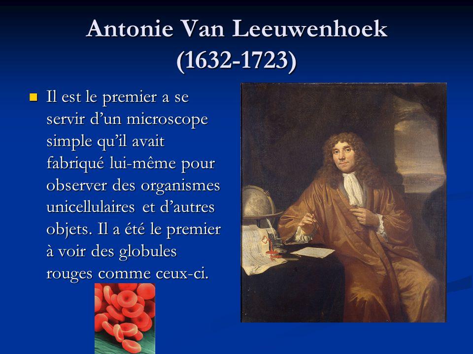 Antonie Van Leeuwenhoek (1632-1723) Il est le premier a se servir d'un microscope simple qu'il avait fabriqué lui-même pour observer des organismes unicellulaires et d'autres objets.