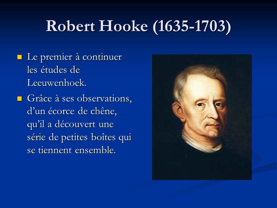 Robert Hooke (1635-1703) Le premier à continuer les études de Leeuwenhoek.