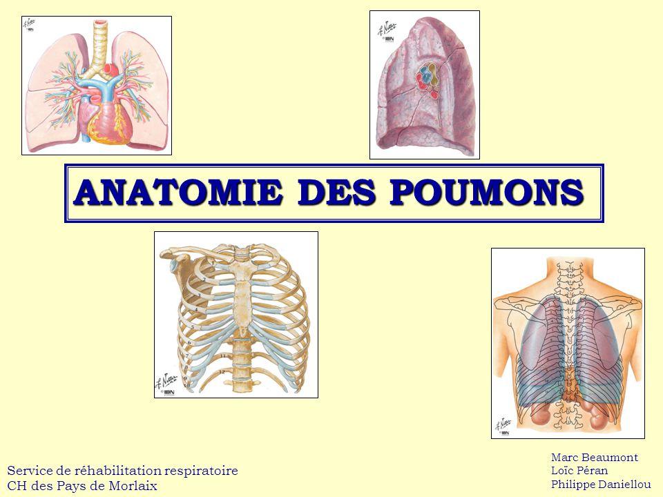 ANATOMIE DES POUMONS Service de réhabilitation respiratoire CH des Pays de Morlaix Marc Beaumont Loïc Péran Philippe Daniellou