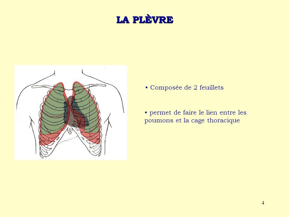 4 LA PLÈVRE Composée de 2 feuillets permet de faire le lien entre les poumons et la cage thoracique