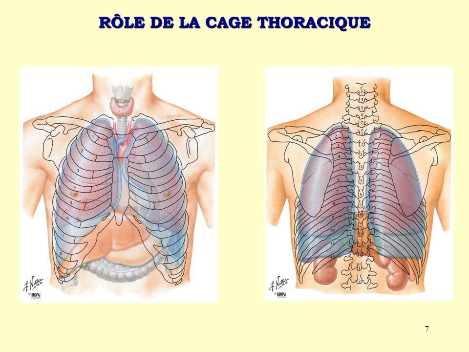 7 RÔLE DE LA CAGE THORACIQUE