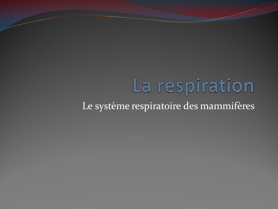 Les voies respiratoires supérieures L'air entre par les narines et la bouche.