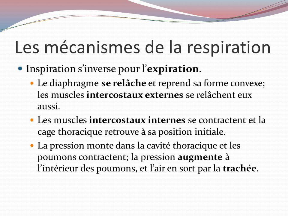 Les mécanismes de la respiration Inspiration s'inverse pour l'expiration.