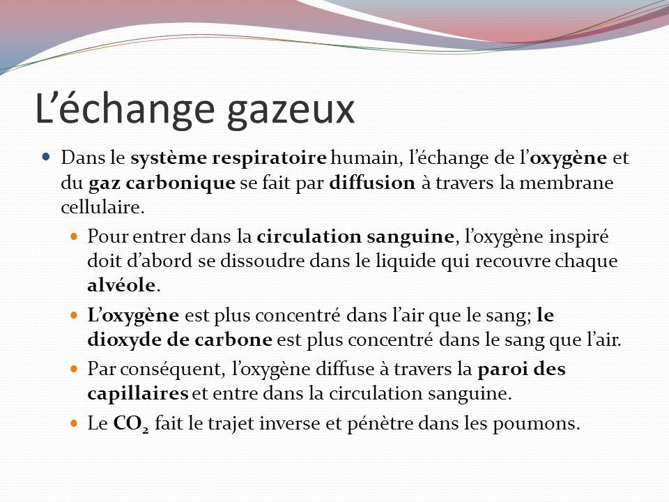 L'échange gazeux Dans le système respiratoire humain, l'échange de l'oxygène et du gaz carbonique se fait par diffusion à travers la membrane cellulaire.