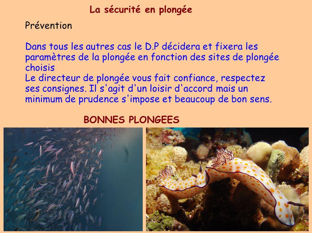 Prévention Dans tous les autres cas le D.P décidera et fixera les paramètres de la plongée en fonction des sites de plongée choisis Le directeur de plongée vous fait confiance, respectez ses consignes.
