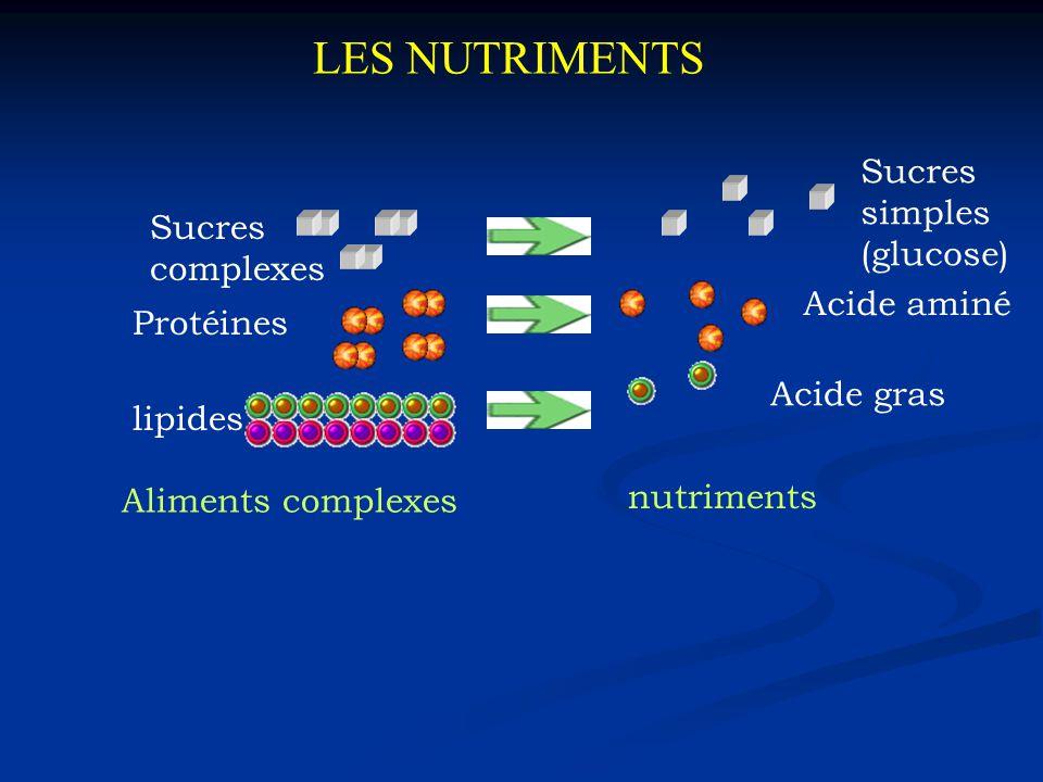 LES NUTRIMENTS Protéines Sucres complexes lipides Aliments complexes nutriments Acide aminé Acide gras Sucres simples (glucose)