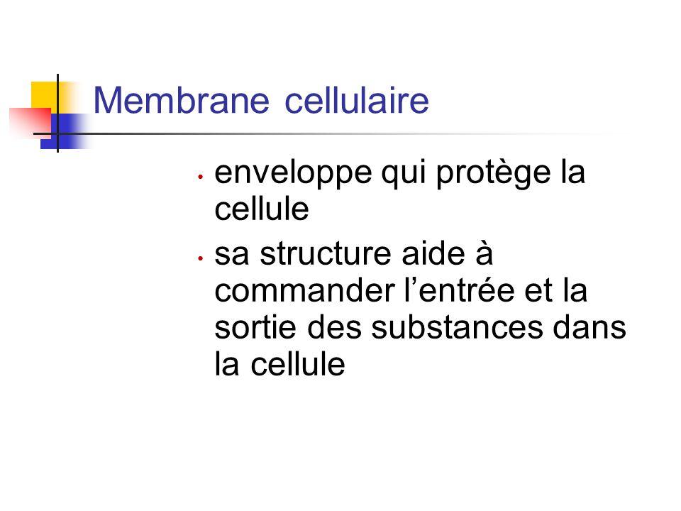 Membrane cellulaire enveloppe qui protège la cellule sa structure aide à commander l'entrée et la sortie des substances dans la cellule
