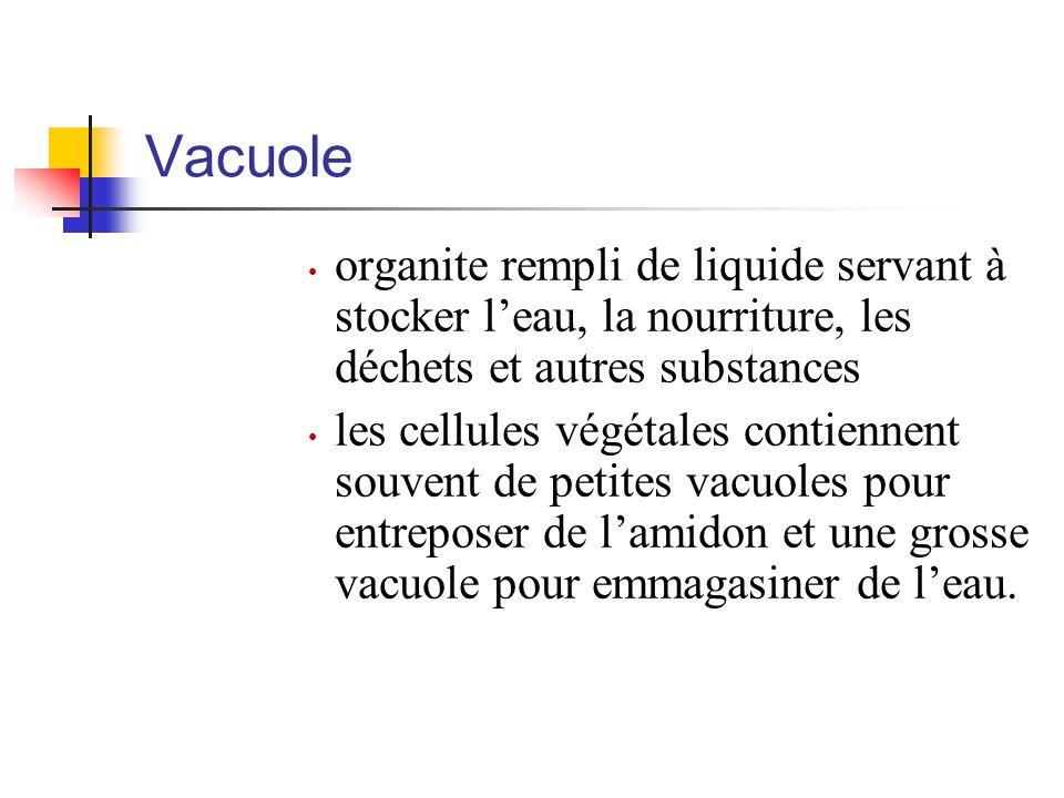 Vacuole organite rempli de liquide servant à stocker l'eau, la nourriture, les déchets et autres substances les cellules végétales contiennent souvent de petites vacuoles pour entreposer de l'amidon et une grosse vacuole pour emmagasiner de l'eau.