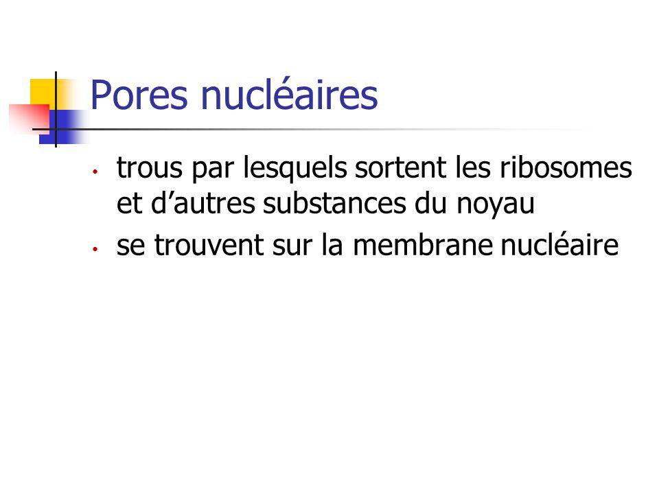 Pores nucléaires trous par lesquels sortent les ribosomes et d'autres substances du noyau se trouvent sur la membrane nucléaire