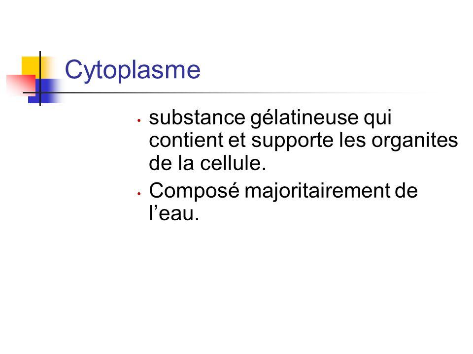 Cytoplasme substance gélatineuse qui contient et supporte les organites de la cellule.
