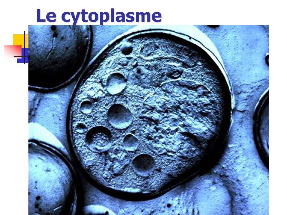Le cytoplasme
