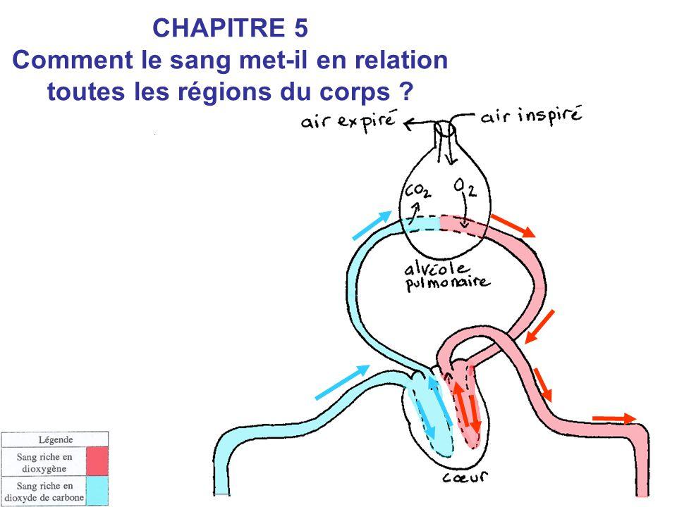 CHAPITRE 5 Comment le sang met-il en relation toutes les régions du corps ?