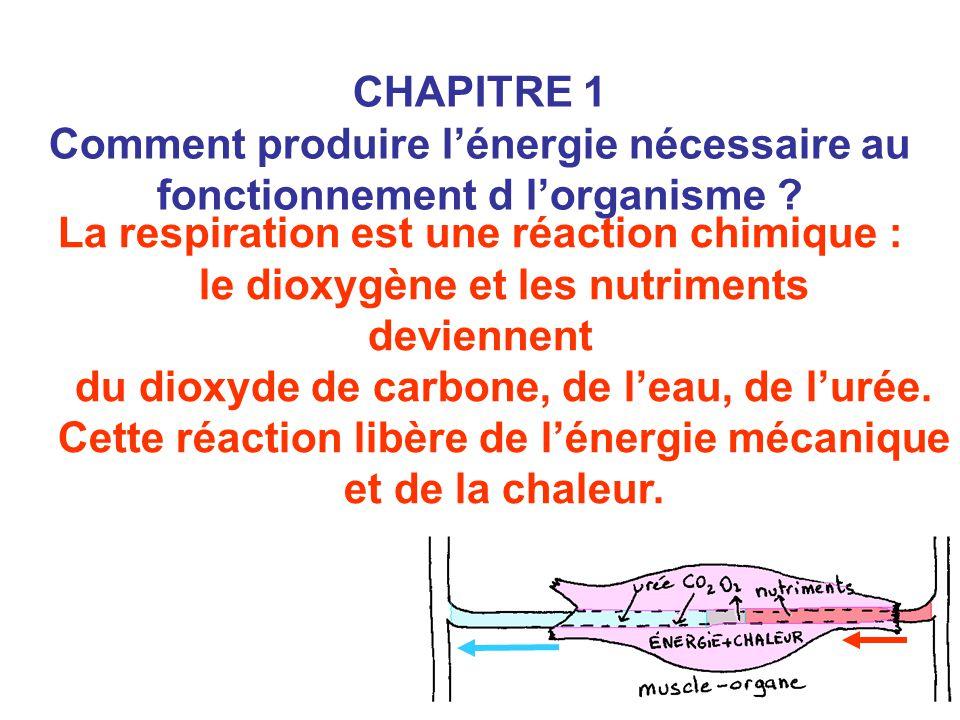 La respiration est une réaction chimique : le dioxygène et les nutriments deviennent du dioxyde de carbone, de l'eau, de l'urée. Cette réaction libère