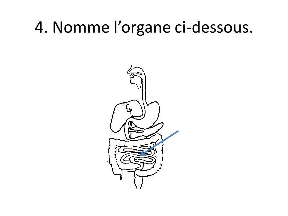 4. Nomme l'organe ci-dessous.