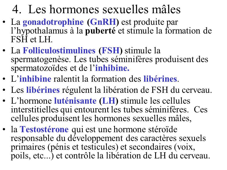 4. Les hormones sexuelles mâles La gonadotrophine (GnRH) est produite par l'hypothalamus à la puberté et stimule la formation de FSH et LH. La Follicu