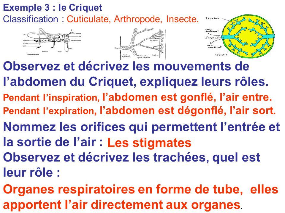 Exemple 3 : le Criquet Classification : Cuticulate, Arthropode, Insecte. Observez et décrivez les mouvements de l'abdomen du Criquet, expliquez leurs