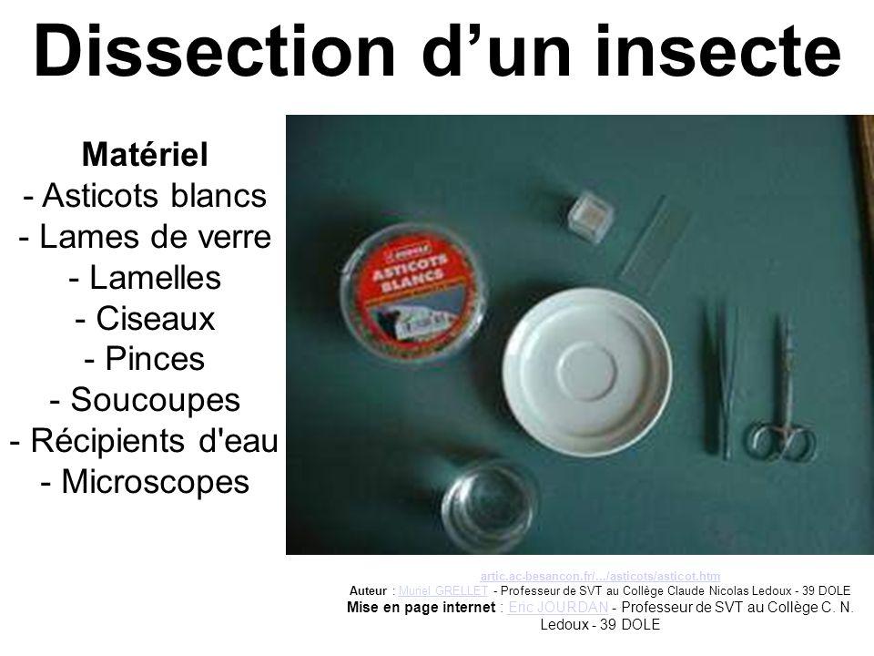 Dissection d'un insecte Matériel - Asticots blancs - Lames de verre - Lamelles - Ciseaux - Pinces - Soucoupes - Récipients d'eau - Microscopes artic.a