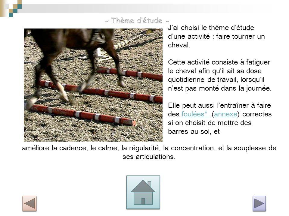 J'ai choisi le thème d'étude d'une activité : faire tourner un cheval. Cette activité consiste à fatiguer le cheval afin qu'il ait sa dose quotidienne