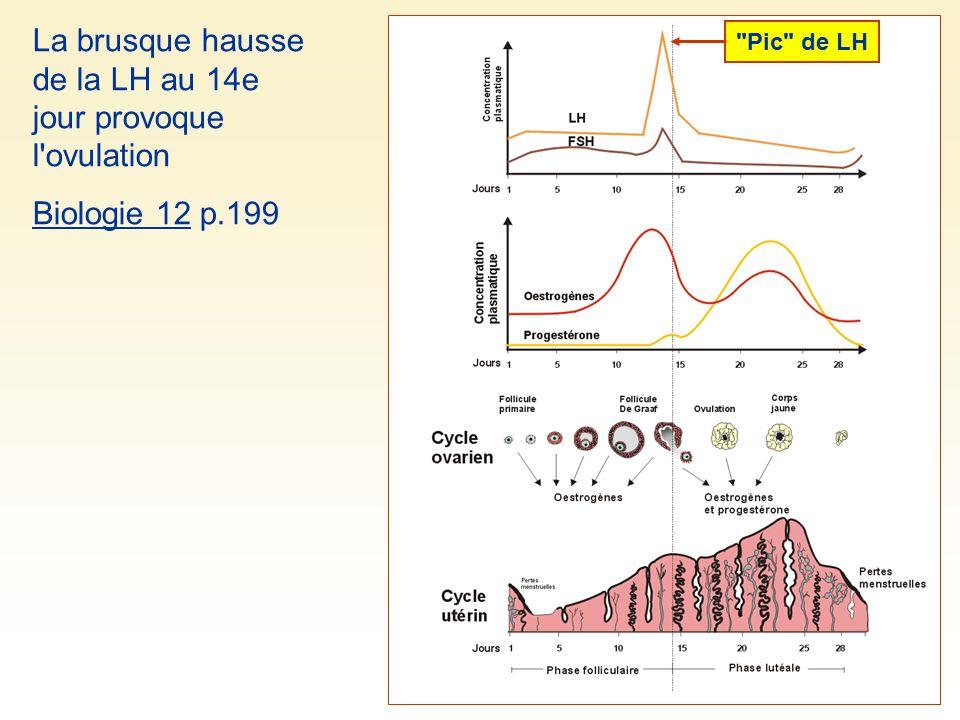 La brusque hausse de la LH au 14e jour provoque l'ovulation Biologie 12 p.199