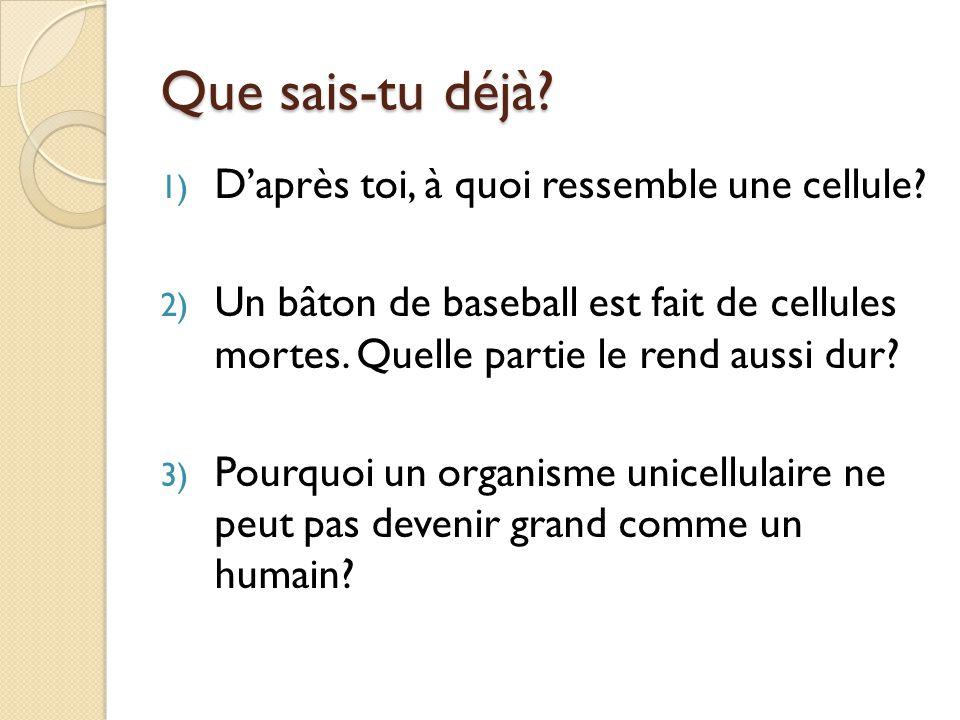 Dans ton journal de science….
