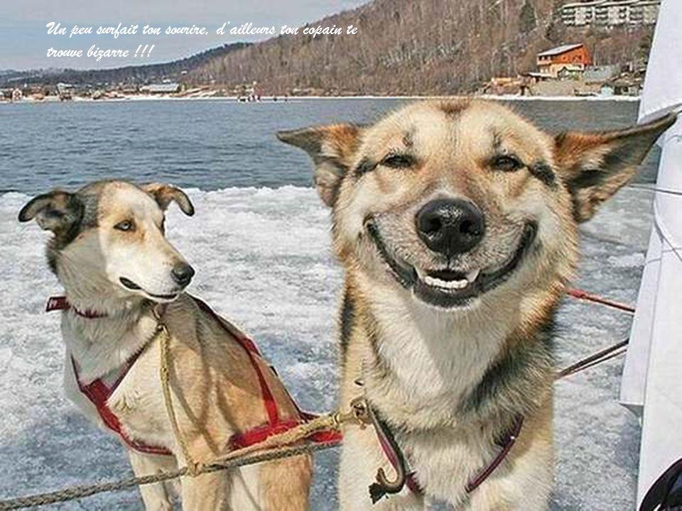 Mignon avec ton air penché… Un peu surfait ton sourire, d'ailleurs ton copain te trouve bizarre !!!