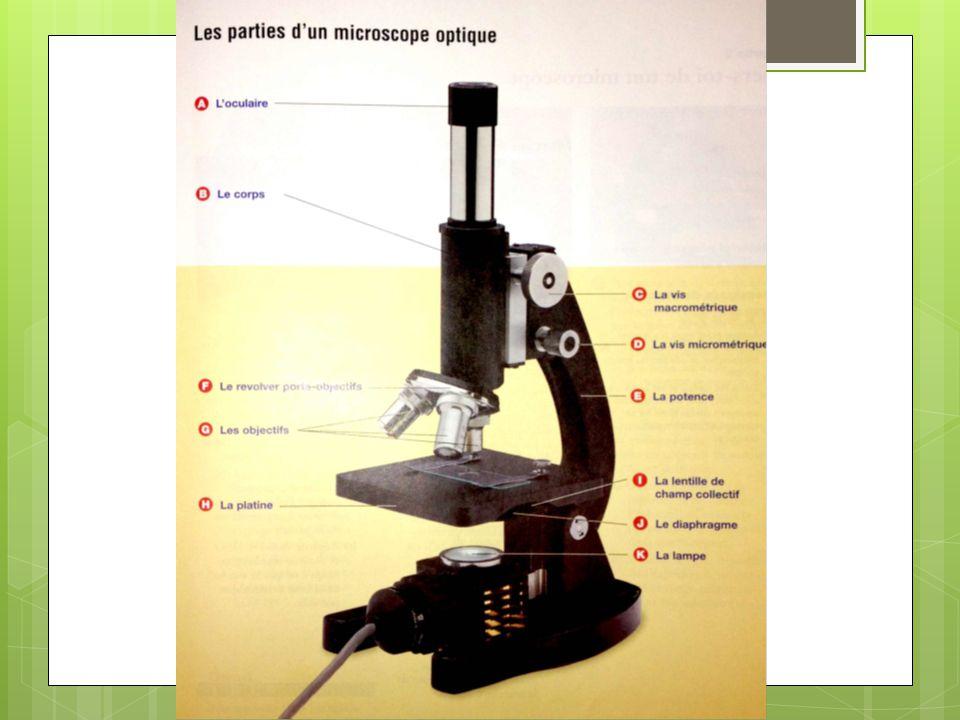 Les parties d'un microscope optique A) L'oculaire La partie où tu mets l'oeil.