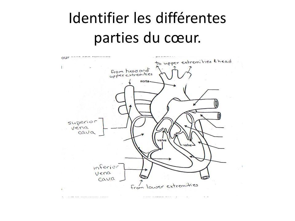Identifier les différentes parties du cœur.