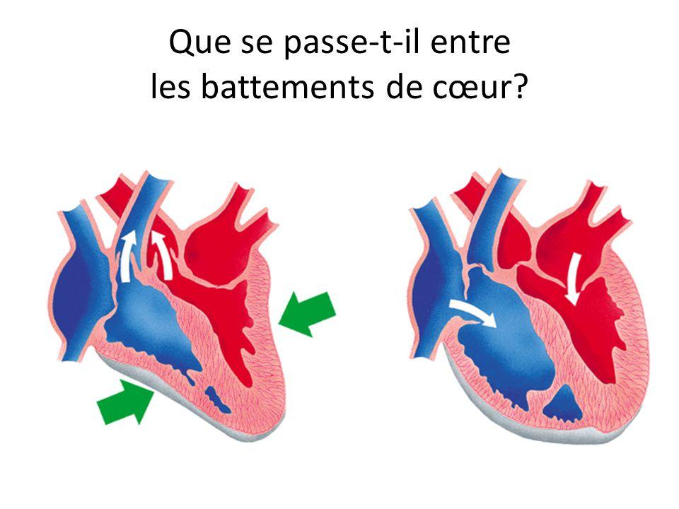 Que se passe-t-il entre les battements de cœur?