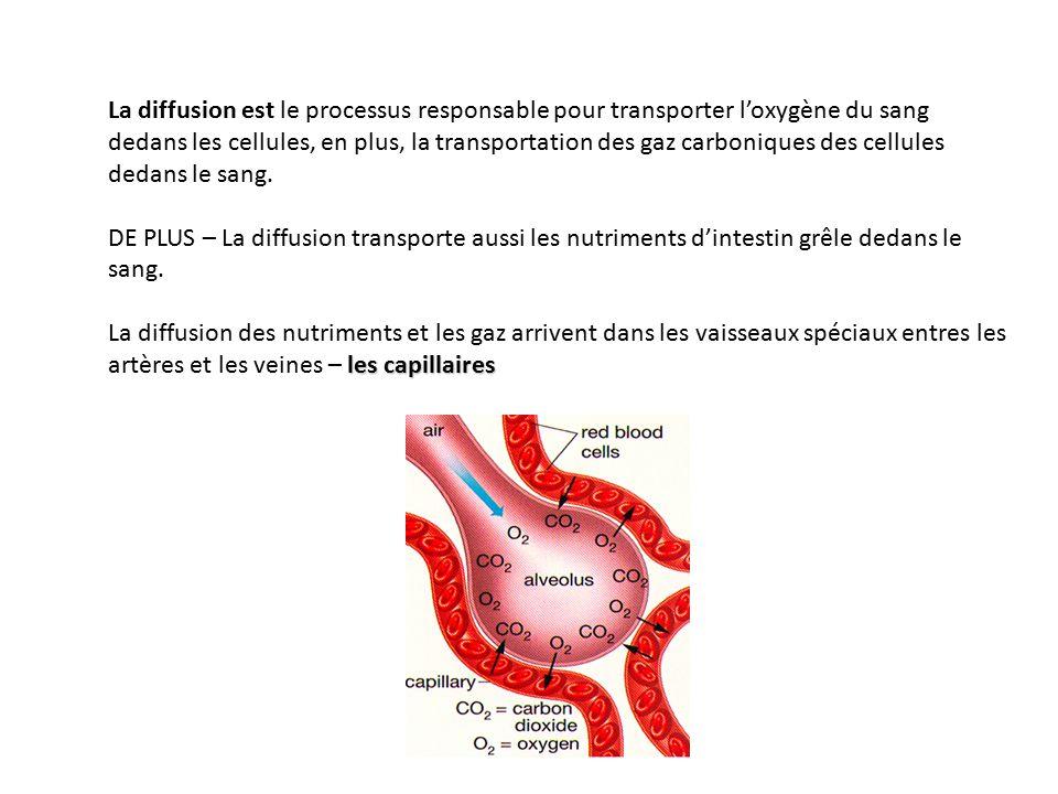 La diffusion est le processus responsable pour transporter l'oxygène du sang dedans les cellules, en plus, la transportation des gaz carboniques des cellules dedans le sang.