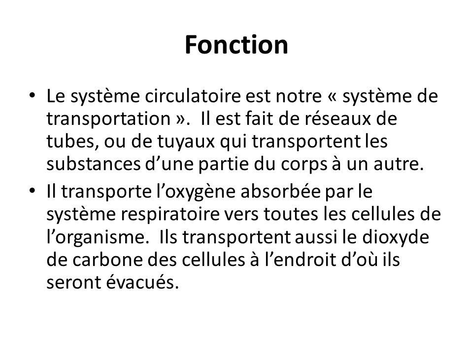 Fonction Le système circulatoire est notre « système de transportation ».