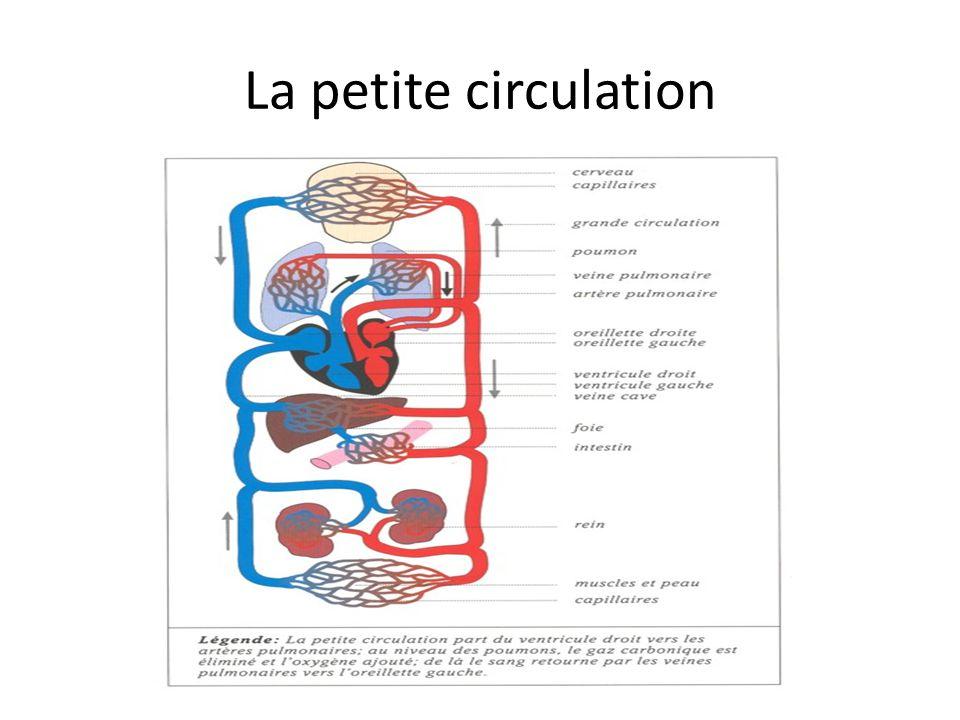 LA STRUCTURECE QUI SE PASSE LA VEINE CAVE INFÉRIEURE ET SUPÉRIEURE - Noms spéciaux pour les veines qui font retourner le sang non oxygénés à l'oreillette droite.
