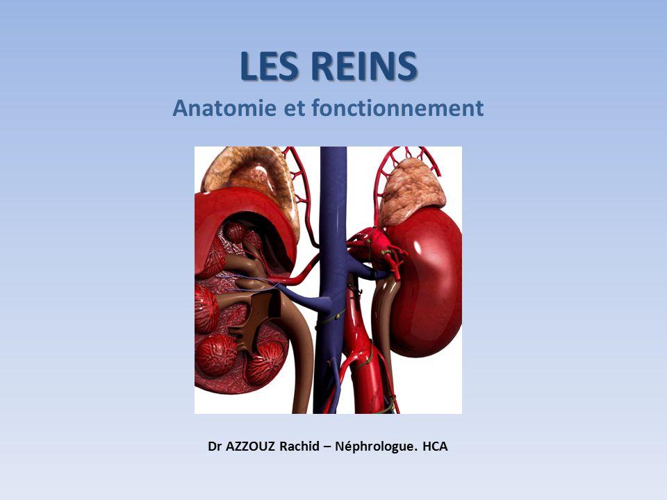 LES REINS Anatomie et fonctionnement Dr AZZOUZ Rachid – Néphrologue. HCA