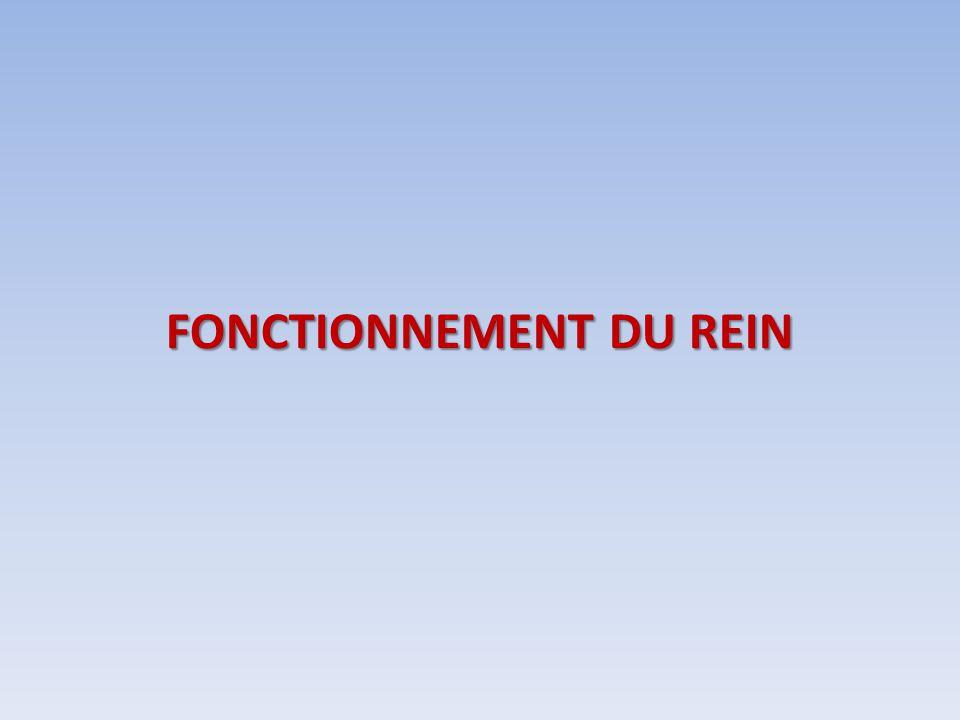 FONCTIONNEMENT DU REIN