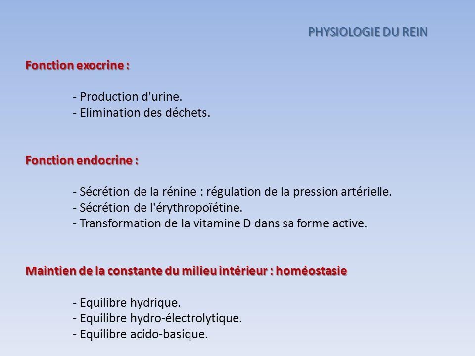 Fonction exocrine : - Production d'urine. - Elimination des déchets. Fonction endocrine : - Sécrétion de la rénine : régulation de la pression artérie