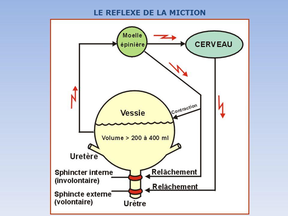 LE REFLEXE DE LA MICTION